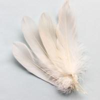 화이트깃털(M)_5P