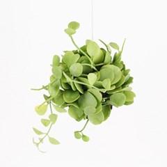 공기정화식물 - 디시디아 그린
