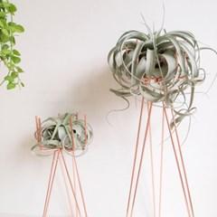 AP676.세로그라피카 공기정화식물