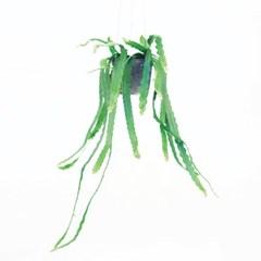 희귀식물(Rare Plant) - 립살리스 쇼우