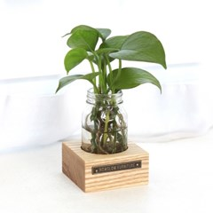 식물트레이 1P