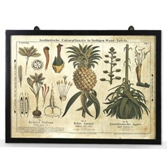 pineapple frame(파인애플 액자)