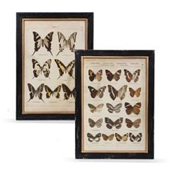 butterfly frame(버터플라이 프레임)