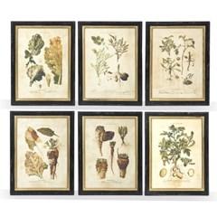 vegetable frame(채소 프레임)