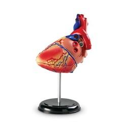 (러닝리소스)LER3334 해부 모델 모형 심장/과학_(1139202)