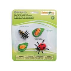 662716 무당벌레의성장과정 Life Cycle of a Ladybug_(790009)