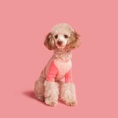 배색니트-핑크
