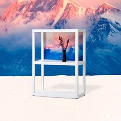 10x10 유어쉘프 Rose Serenity Edition