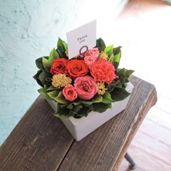 GISELLE CARNATION_프리저브드플라워 카네이션(시들지 않는 꽃)