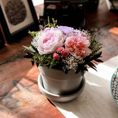 BELLE CARNATION_프리저브드플라워 카네이션(시들지 않는 꽃)