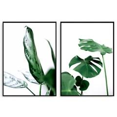 보타니컬 몬스테라 포스터 식물액자 세트