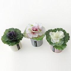 양배추 꽃 파스텔 화분세트