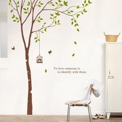 dc111-자작나무 그늘2