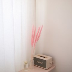핑크 미니 팜파스