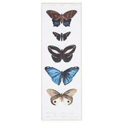 HL 다섯마리의 나비_(484350)