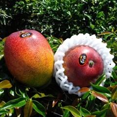 애플망고 3kg(5-6수)왕망고 특상품/과일의 황제/산지직송