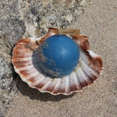A PEARL IN THE SHELL _ cerulean blue