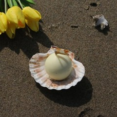 A PEARL IN THE SHELL _ cream