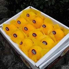 황금향 1.5kg(9-14수)_선물용 소과/생기가득 비타민C!!