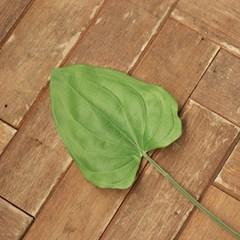 호스타 잎_(962269)