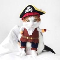 Miyopet 해적선장 고양이옷 강아지옷 코스튬 할로윈