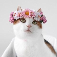 Miyopet 핑크블라썸 화관 머리띠 고양이옷 강아지옷 코스튬 할로윈
