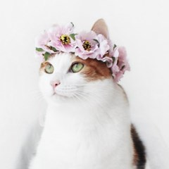 Miyopet 연핑크동백 고양이옷 강아지옷 코스튬 할로윈