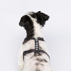Label Harness Charcoal