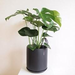 인테리어식물 몬스테라화분L + 매트블랙 도자기 셋트