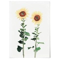 패브릭 천 포스터 F046 식물 꽃 벽걸이 해바라기