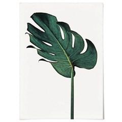 패브릭 천 포스터 F058 식물 태피스트리 몬스테라 no.1