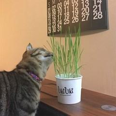 우키우키 고양이 캣그라스