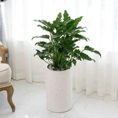 [공기정화식물] 쎌렘_테라조 (인테리어화분 개업화분 집들이화분)