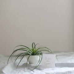 take me home 포니테일 (수경재배) 식물 화병 세트