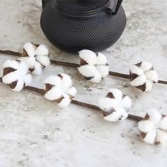 목화꽃 가지
