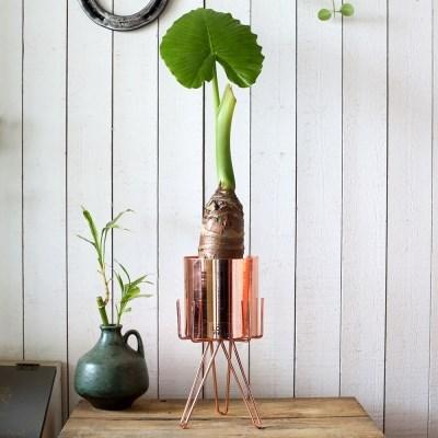 공기정화식물 알로카시아+메탈와이어 스탠드화분