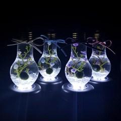 애완식물 마리모 LED조명등