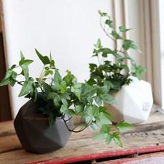 천연가습기 수경식물 아이비 별화기