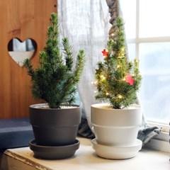 예쁜미니화분 코니카식물+모던세라믹팟