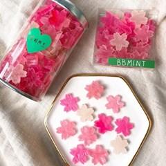 비비민트 벚꽃 코하쿠토