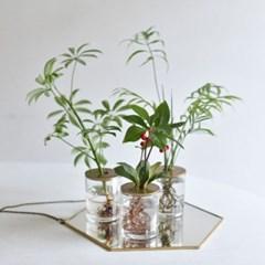공기정화식물 수경재배 세트