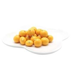 싱그러운 제주감귤 치즈초콜릿