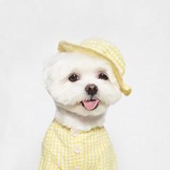 위티 체크 셔츠 (옐로우)