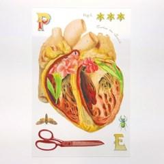 [에코드소울] 비세라가든 투명 카드 - Heart