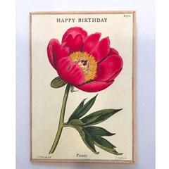 카발리니 카드-Happy birthday peony