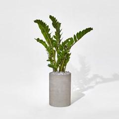 금전수 _Concrete pot _Cylinder ( 2size )