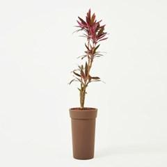아이차카 _Eco Plastic pot _3types