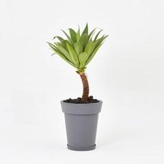 아가베 _Eco Plastic pot _3types