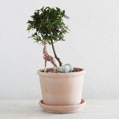 피어리스 외목대나무 이태리토분