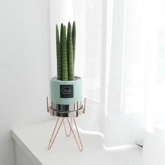 new 공기정화식물 스투키